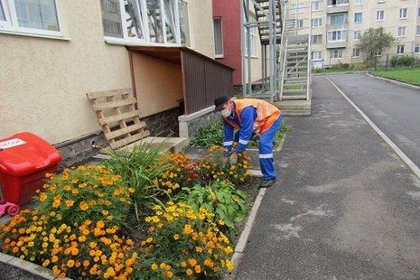В Пушкинском районе начался осенний месячник благоустройства , фото-1